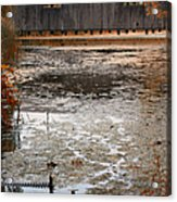 Ducking Under The Bridge Acrylic Print