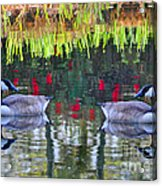 Duckland Pond Reflections Acrylic Print