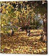 Ducklings In Sunshine Acrylic Print