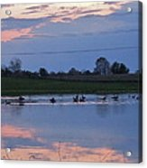 Ducks And Geese At Sunset Acrylic Print