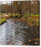 Ducks And Leaves Acrylic Print