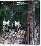 Ducks And Turtles Acrylic Print