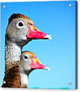 Ducks At Attention Acrylic Print