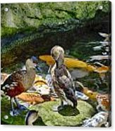 Ducks At The Koi Pond Acrylic Print