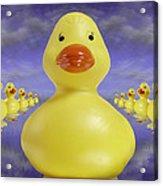 Ducks In A Row 3 Acrylic Print