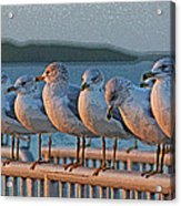 Ducks In A Row Acrylic Print