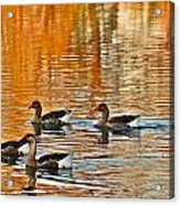Ducks In The Fall Acrylic Print