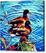 Ducks On A Log Acrylic Print
