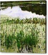 Duckweed Reflection Acrylic Print
