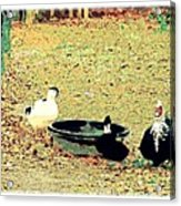 Ducky Afternoon Acrylic Print by YoMamaBird Rhonda