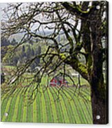 Dundee Hills Wine Country Acrylic Print