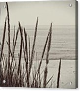 Dune Grass In Early Spring Acrylic Print