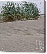 Dune Grass On Beach Dune Landscape Art Prints Acrylic Print