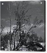 Dunes Tree Bw Acrylic Print