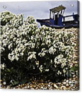 Dungeness Seascape Acrylic Print by Lesley Rigg