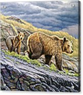 Dunraven Pass Grizzly Family Acrylic Print by Paul Krapf
