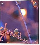 Dusk Flowers Acrylic Print
