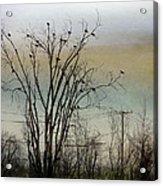 Dusk Sky Acrylic Print