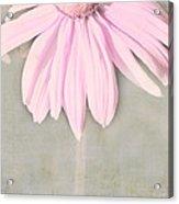 Dusky Pink Coneflower Acrylic Print