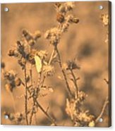 Dusty Desert  Acrylic Print