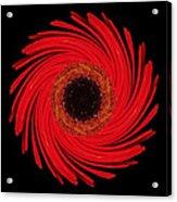 Dying Amaryllis Flower Mandala Acrylic Print