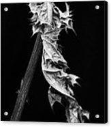 Dying Leaf Acrylic Print
