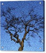 Dynamic Dawn Acrylic Print