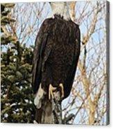 Eagle 1991a Acrylic Print