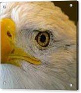 Eagle 6 Acrylic Print