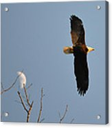 Eagle And Moon Acrylic Print