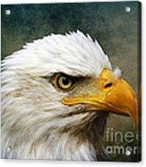 Eagle Art Acrylic Print