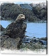 Eagle At Rest Acrylic Print