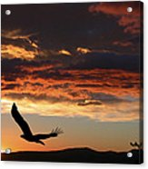 Eagle At Sunset Acrylic Print by Shane Bechler