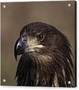 Eagle Beauty Acrylic Print