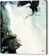 Eagle building Nest. Acrylic Print