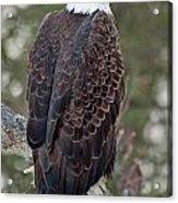 Eagle Acrylic Print