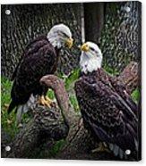 Eagle Couple Acrylic Print