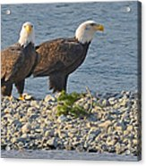 Eagle Couple Acrylic Print