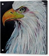 Eagle Eye Acrylic Print by Jeanne Fischer