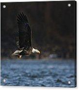 Eagle Ice Glide Acrylic Print