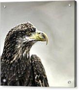 Eagle In The Mist Acrylic Print