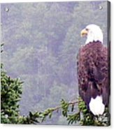 Eagle Looking For Breakfast On A Misty Morning Acrylic Print