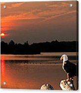 Eagle On Stump Overlooking Water At Sundown Acrylic Print