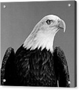 Eagle On Watch Black And White Acrylic Print