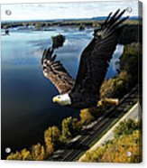 Eagle Over Mississippi  Acrylic Print