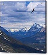 Eagle Over Peyto Lake Acrylic Print
