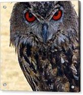 Eagle Owl Acrylic Print