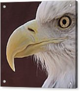 Eagle Portrait Freehand Acrylic Print