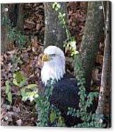 Eagle Pose Acrylic Print