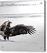 Eagle Prayer Acrylic Print by RJ Martens